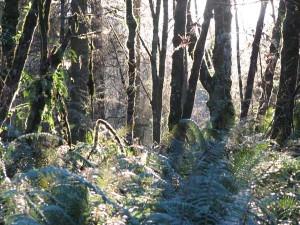 Ferns and sunlight