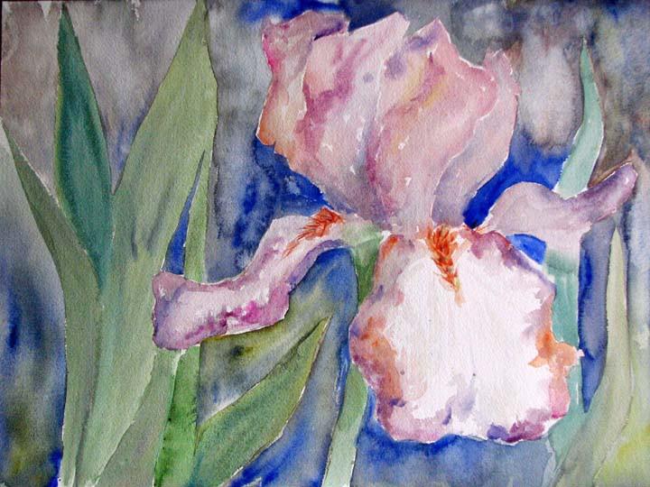 Iris en plein air