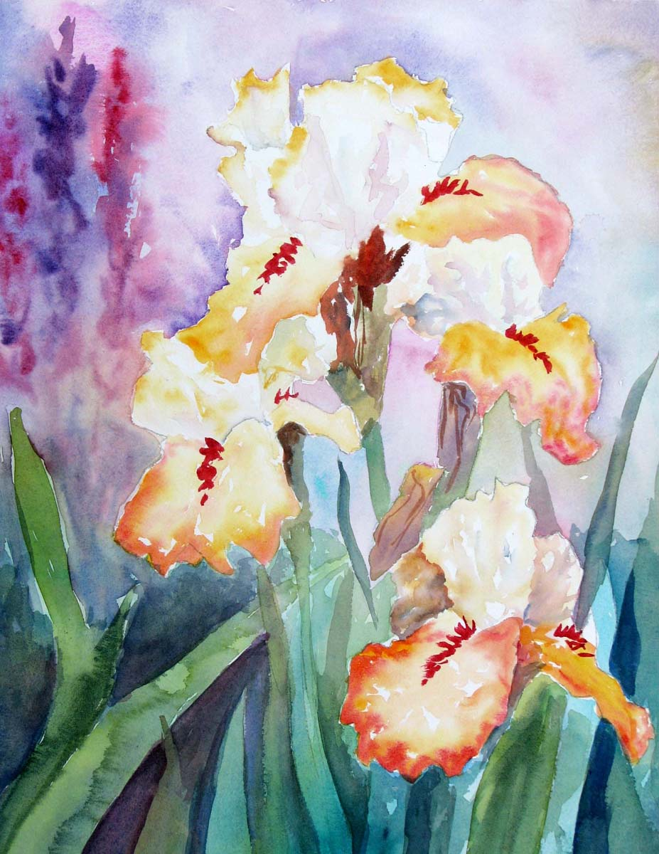 Gambouge Iris
