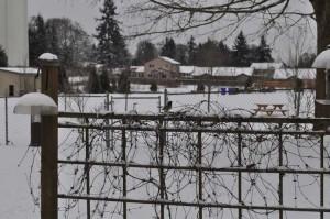 """Snowmagedon"" backyard"