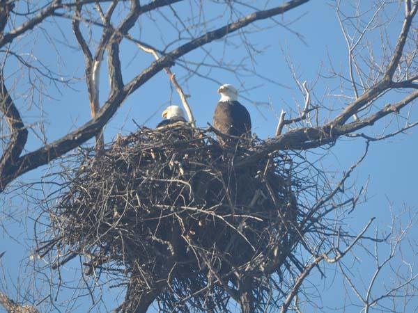 eaglesonnest