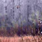 Ankeny birding