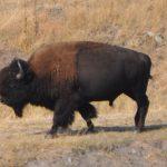 Montana adventure – days 1 and 2