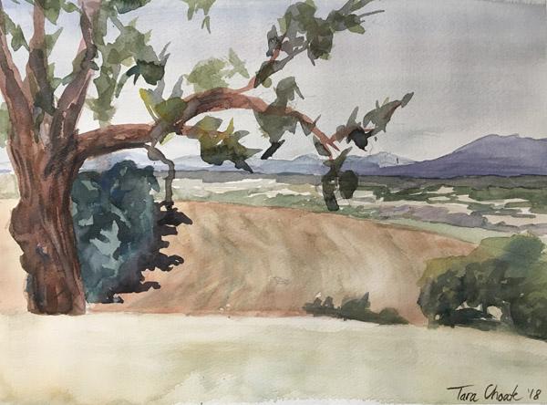 Ankeny Fields
